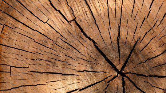 Een bijzondere houtsoort