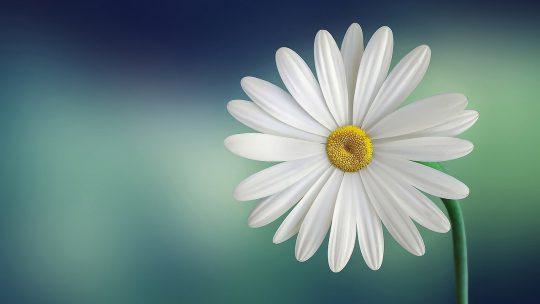 Bloemenliefhebbers genieten het hele jaar door met buiten bloembakken